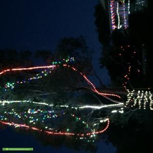 Christmas Light display at 1 Jerrabomberra Hill Road, Jerrabomberra