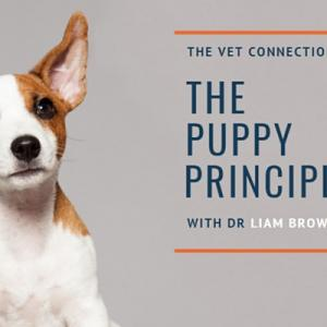 The Puppy Principles - Christmas Puppy!